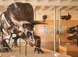 Institut de Paleontologia Miquel Crusafont © Eduard Solà Vázquez /Orígen: Wikipèdia.org