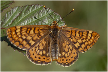 El color de les papallones