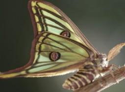 El mon de les papallones-home-joan_condal