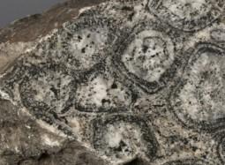 Detall d'una granit orbicular de Finlàndia (MGB PR-14386) ©MCNB