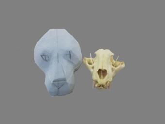 Crani jaguar