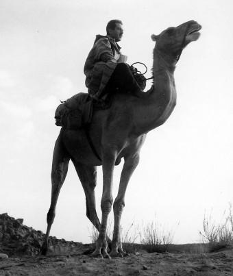 Mateu al Sahara-fig2