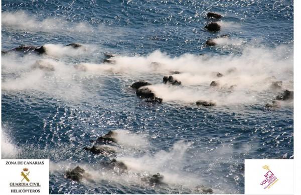 Restingolites flotant a l'aigua / InVolcan Canaries