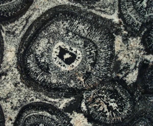 Detall d'un granit orbicular