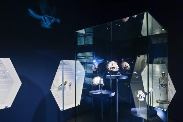 Illa de l'Evolució. Exposició Planeta Vida al Museu Blau