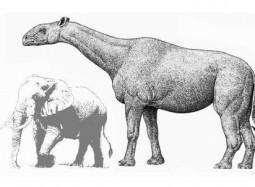 indricotherium-gran