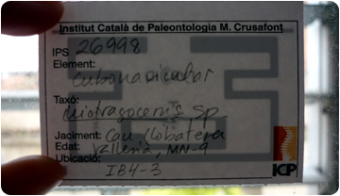Insttitut Català de Paleontologia