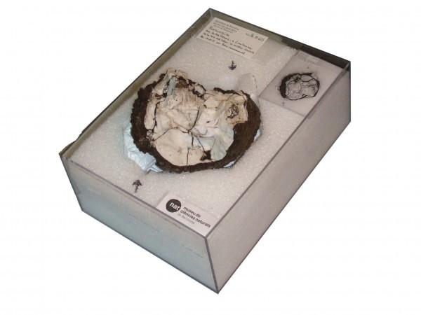 Restingolita dins d'una caixa, protegida de possible vibracions i amb condicions de temperatura i humitat constants / Yael Díaz